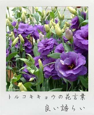 無門庭園,花祭壇,使用生花